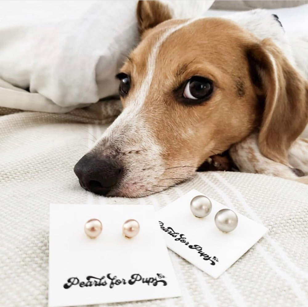 HOWS Fundraiser Pearls For Pups